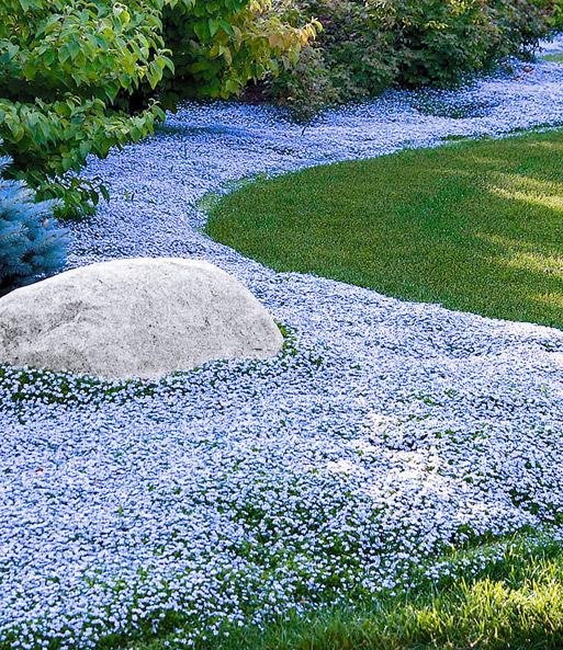 Finde bei Baldur-Garten die schönsten Blumen.